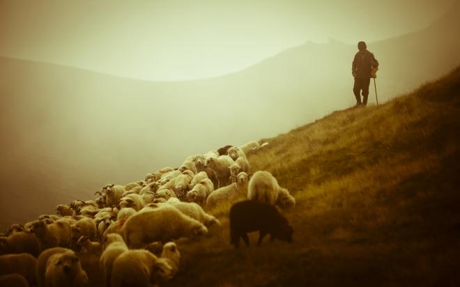 pastor con ovejas, paisaje, paz, tranquilidad, orden, shepherd-sheep-12